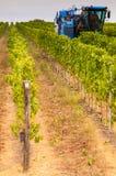 Машина жатки виноградины стоковое изображение rf