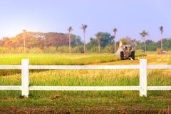 Машина жатки в поле риса Стоковое Изображение RF