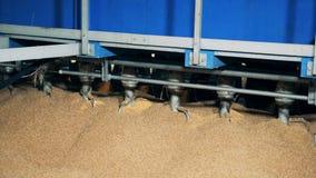 Машина завода работая с зернами, сортируя ее, закрывает вверх сток-видео