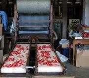 Машина клюквы обрабатывая Стоковые Фотографии RF