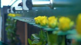 Машина фабрики транспортируя промежуток времени цветков акции видеоматериалы