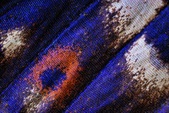 Маштабы бабочки Стоковое фото RF