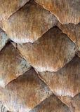 Маштабы елевых конусов Стоковые Фотографии RF