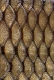 Маштабы Стоковые Фотографии RF