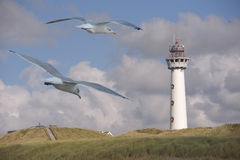 Маяк с чайками Стоковая Фотография