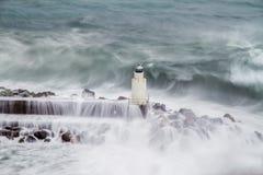Маяк Camogli во время шторма стоковое фото rf