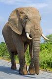 маячить слона стоковые изображения rf