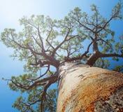 Мадагаскар Стоковая Фотография RF