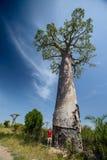 Мадагаскар Стоковое фото RF