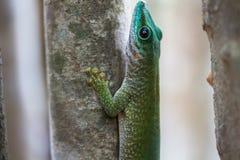 Мадагаскар Стоковые Фотографии RF