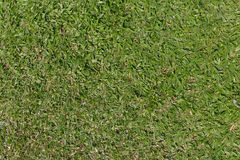 Малайзийская предпосылка зеленой травы Стоковые Изображения