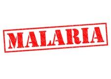 малария иллюстрация штока