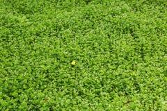 Малая бабочка на зеленой предпосылке природы Стоковые Фото