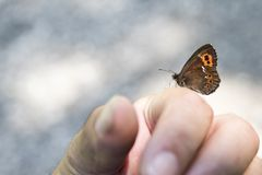 Малая бабочка сидит на руке Стоковая Фотография