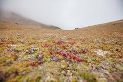 Малая вегетация на высоте в 5000 метров в долине i Khumbu Стоковые Фото