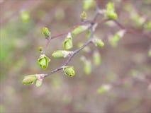 Рукоятка весны Стоковые Фото