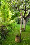 Малая виноградная лоза Стоковое Изображение