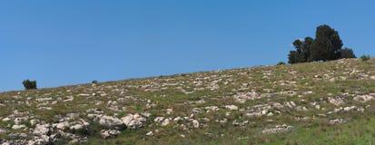 Малая группа в составе деревья холма Стоковая Фотография RF