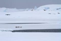 Малая группа в составе пингвины Gentoo которая стоит около отверстия в Стоковое Изображение