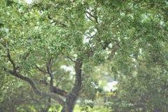 Малая глубина дерева поля Стоковое Фото