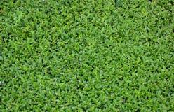 Малая зеленая текстура лист Стоковые Фотографии RF