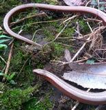 Малая змейка воды Стоковое Фото