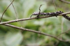 Малая змейка на ветви Стоковое Изображение