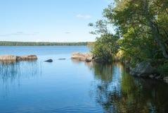 Малая зона тростников в воде, береге с камнями и ветвях смертной казни через повешение деревьев Стоковые Изображения