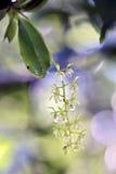 Малая и чувствительная зеленая орхидея в своей среде обитания Стоковое Фото