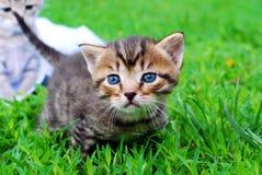 Малая киска с голубыми глазами Стоковые Фото