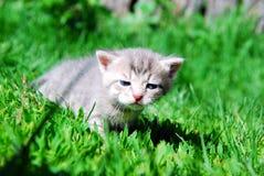 Малая киска Стоковая Фотография RF