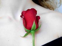 Малая красная роза на плече Стоковые Изображения RF