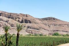 Малая нашивка земледелия в пустыне Стоковые Изображения