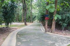 Малая дорога в середине леса Стоковая Фотография RF