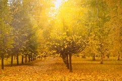 Малая дорожка в парке Стоковые Изображения