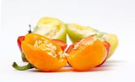 Малая паприка колокола chili на белой предпосылке Стоковые Фото