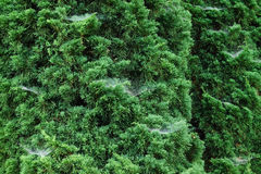 Малая паутина  Стоковое Фото
