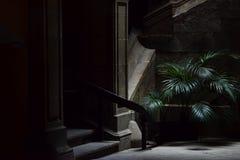 Малая пальма в темной улице, готический квартал в Барселоне Стоковое Изображение RF
