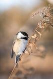 Малая птица сидя на ветви дерева Стоковые Фото
