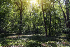 Малая расчистка в лесе освещенном по солнцу стоковые изображения