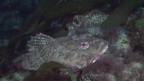 Малая рыба среди утесов на морском дне видеоматериал