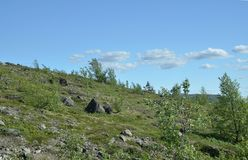 Малая северная вегетация среди валунов на скалистом саммите горы Стоковое Фото