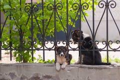 Малая собака смотря через загородку Стоковое Изображение