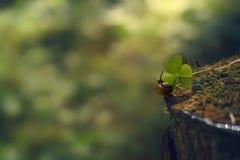 Малая улитка вползает вдоль пня в направлении зеленых лист в лесе утра Стоковое Изображение