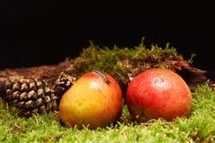 Малая улитка на яблоке в украшении с яблоками, конусом сосны, ветвью и зеленым мхом Стоковые Фотографии RF
