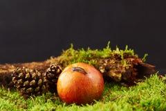 Малая улитка на яблоке в украшении с яблоком, конусом сосны, ветвью и зеленым мхом Стоковое Изображение RF