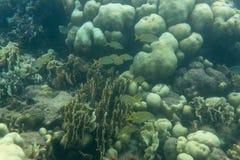 Малая школа рыб стоковые изображения rf
