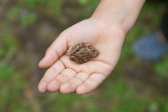 Малая лягушка на ладони Стоковая Фотография