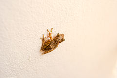 Малая лягушка на стене Стоковое Фото