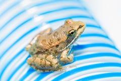 Малая лягушка сидя на striped трубке Стоковое фото RF
